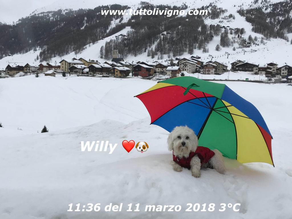 Willy come in spiaggia