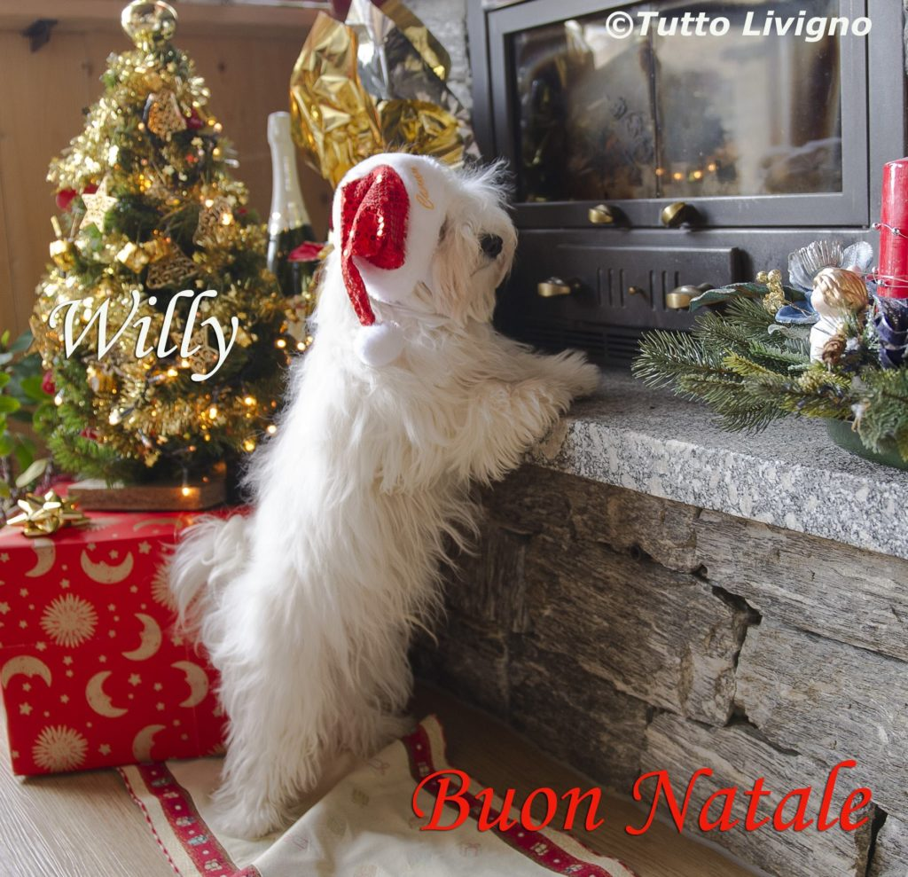 Willy augura buon Natale