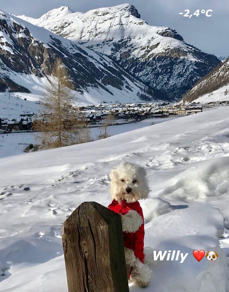 Willy sente il vento