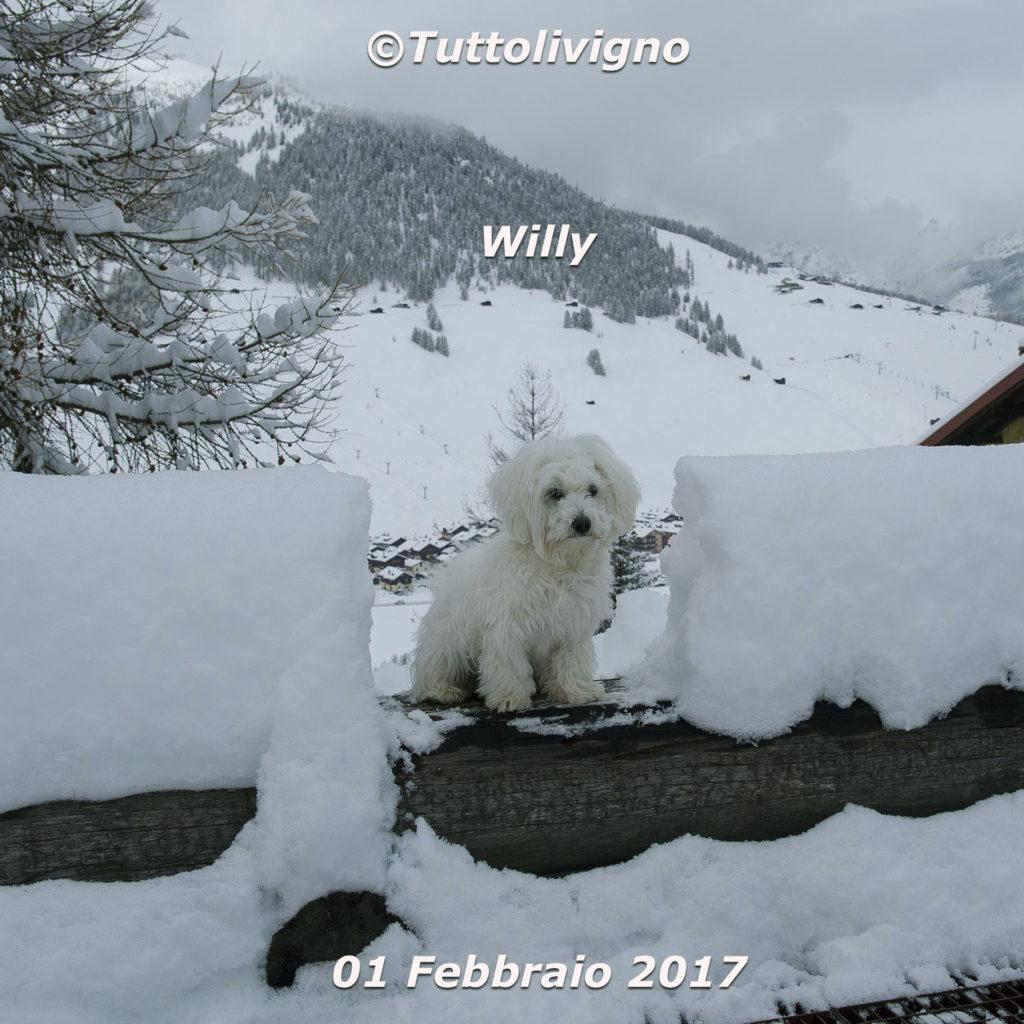 Willy - altezza neve