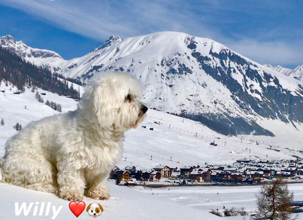 Willy ♥ Livigno e la neve