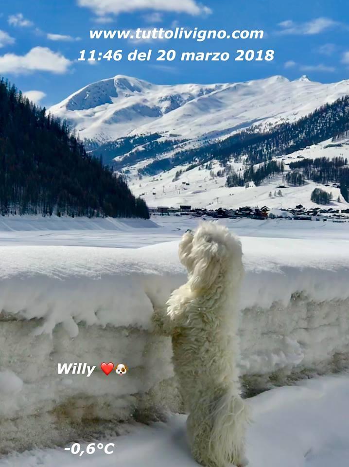 Willy al lago