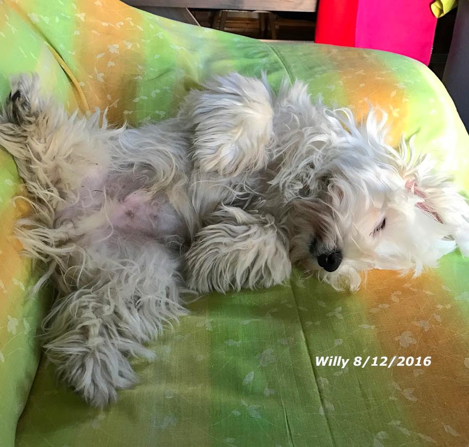 Willy cicciolo dorme