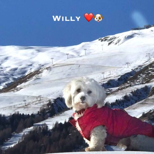 Willy 22-11-20