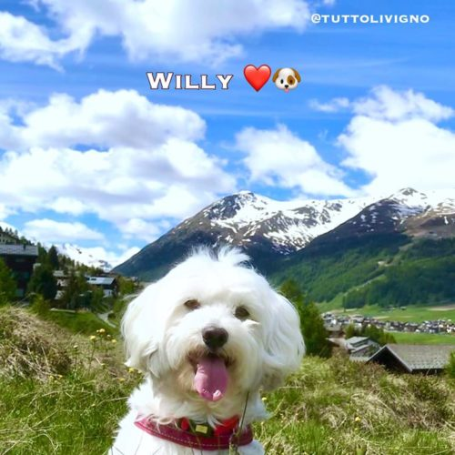 Willy ♥ 31-05-20