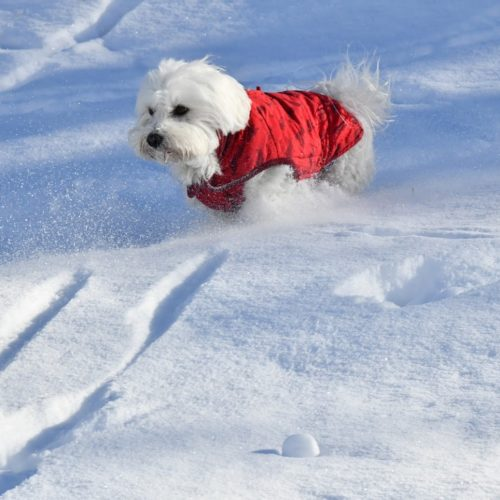 Willy ♥ the beauty of powder snow