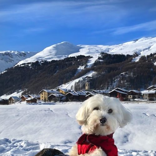 Willy ♥ and the view over San Rocco