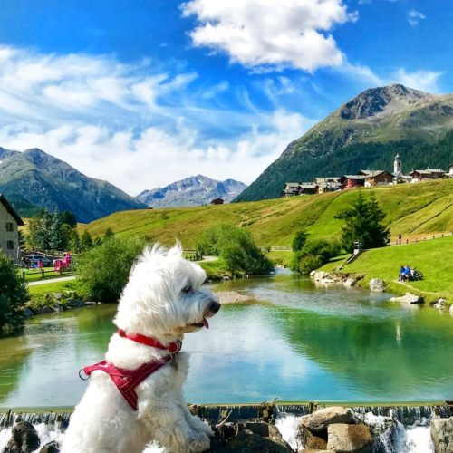 Willy ♥ - at the lake from Luigion