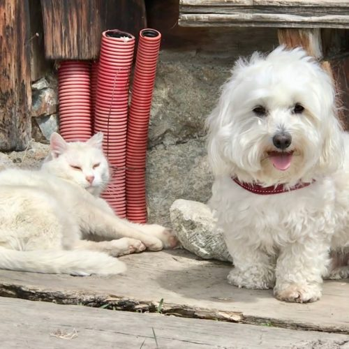 Willy ♥ Livigno - sometimes they are more friends