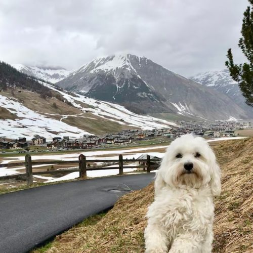 Willy ♥ - practically only two seasons in Livigno, Winter and summer