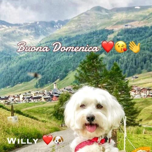 Willy ♥  and the green Livigno