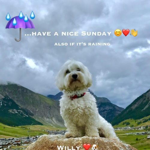 Willy ♥ Sunday greetings