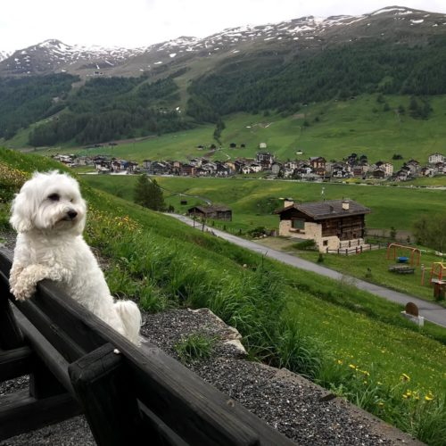 Willy ♥ in late spring