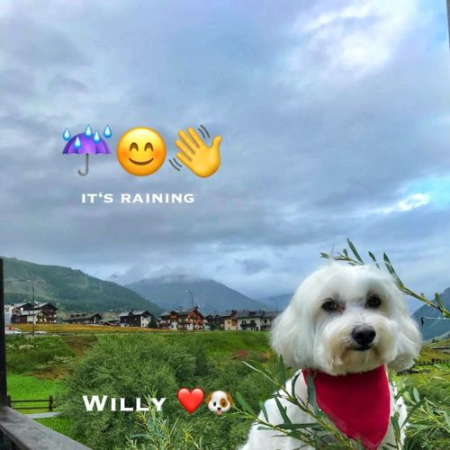 Willy ♥ - a close-up on a rainy day