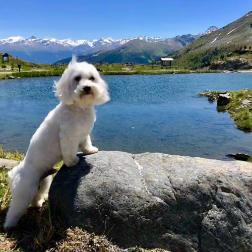 Willy ♥ at the lake at Passo del Foscagno