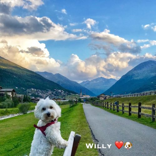 Willy ♥ Livigno - Panorama