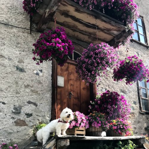 Willy ♥ on the most famous flowered terrace of Livigno