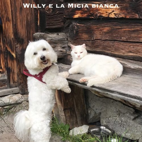 Willy ♥ together with the Micia Bianca