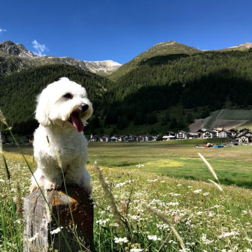 Willy ♥ in the Florino area - magnificent district of Livigno