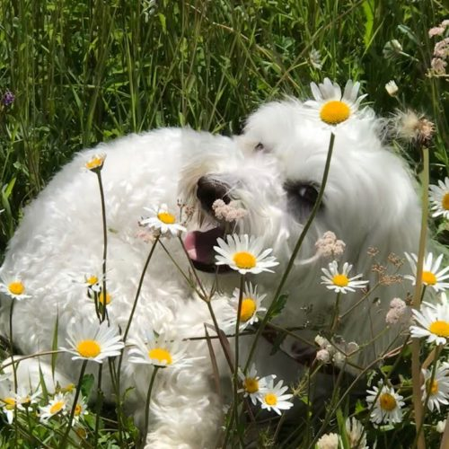 Willy ♥ a meadow full of daisies to play on