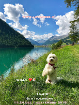 Willy ♥ on the shores of Lake Livigno