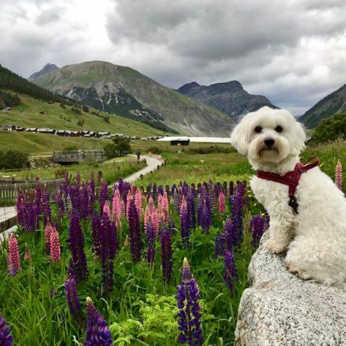 Willy ♥ a beautiful flower garden