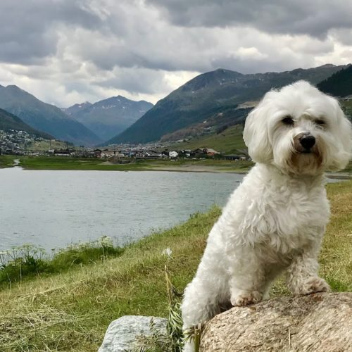 Willy ♥ a beautiful place to admire Livigno from the lake