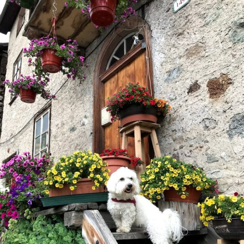 Willy ♥ in the midst of the flowers of Livigno's best known terrace
