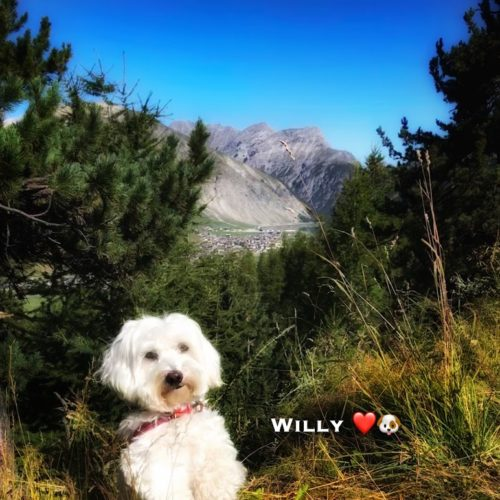 Willy ♥ September colors