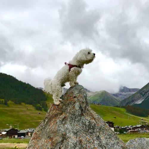 Willy ♥ climber to show Livigno