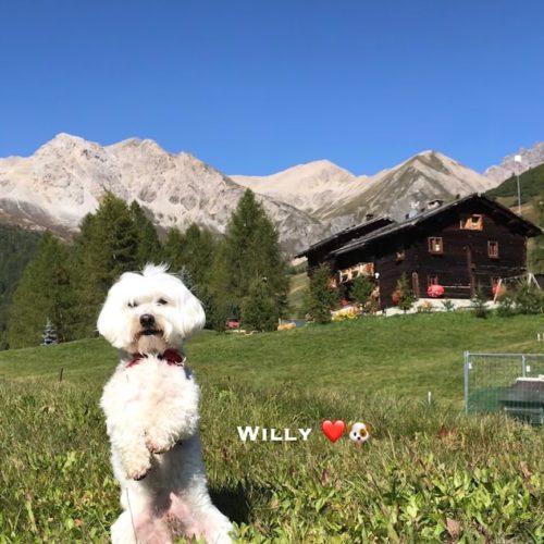 Willy ♥ al Chestel