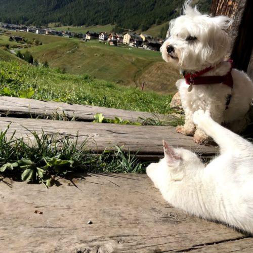 Willy ♥ e la Micia Bianca