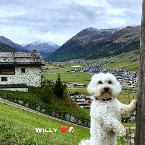 Willy ♥ and Livigno seen from Zona Pemont
