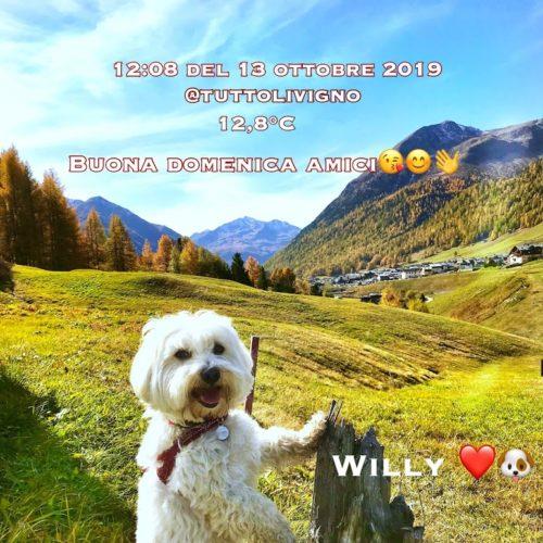 Willy ♥ - Sunday greeting