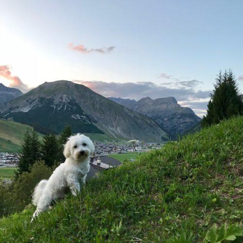 Willy ♥ - Monte Motto - La Motta - Landscape