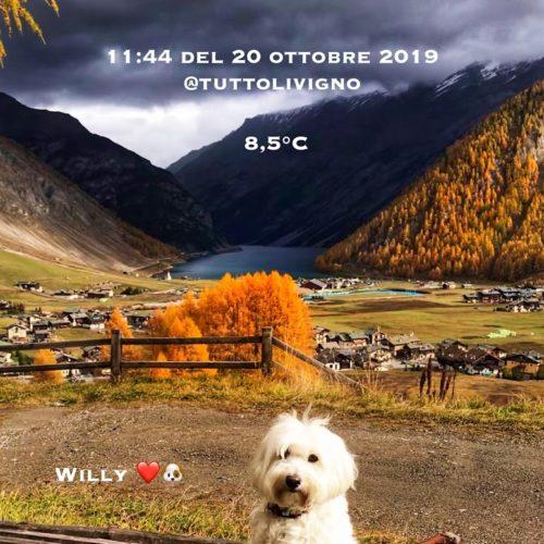 Willy ♥ Livigno - Autumn