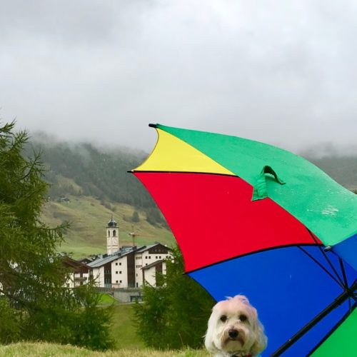 Willy ♥ Today it's raining - the bell tower of San Rocco