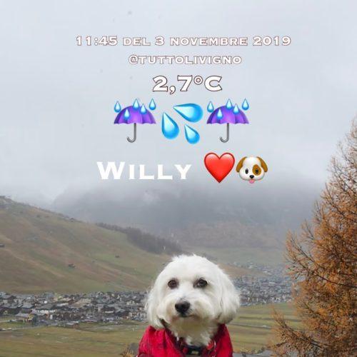 Willy ♥ in November