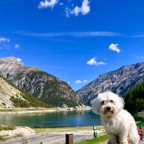 Willy ♥ Livigno lake - Monte La Motta - Cassa del Ferro