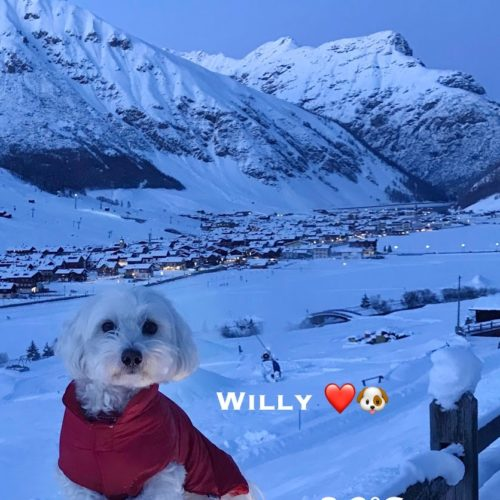 a photograph of Willy ♥ at dusk