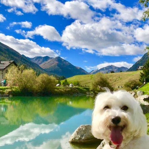 Willy ♥ Livigno - Luigion lake - Monte Buon Curato - Monte Vago