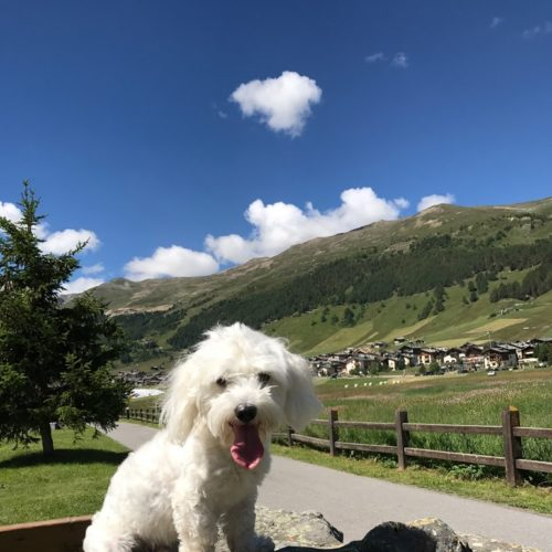 Willy ♥ very young during the summer in Livigno