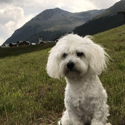 Willy ♥ very young on the meadows of Livigno