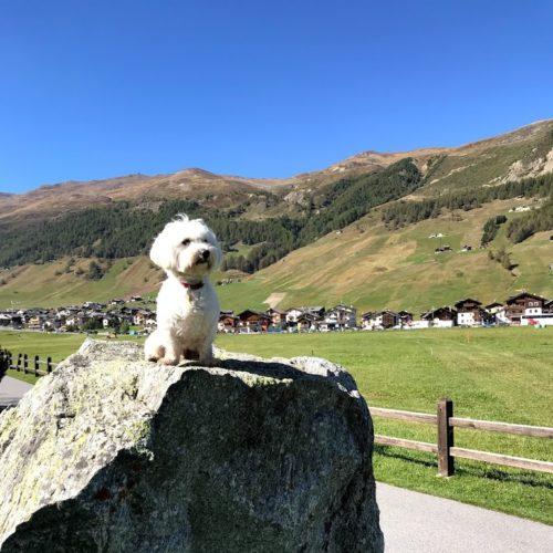 Willy ♥ Livigno Via Rin - Costa del Sol Mountains