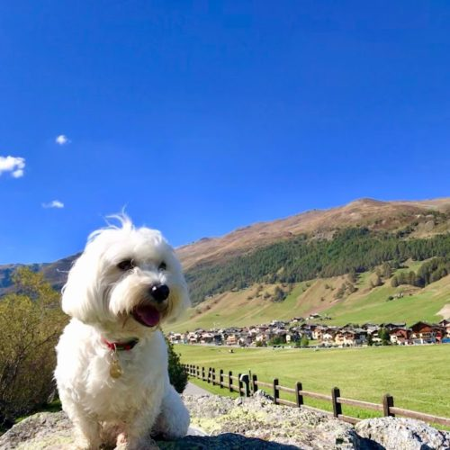 Willy ♥ Livigno - Panorama - Costa del Sol Mountains