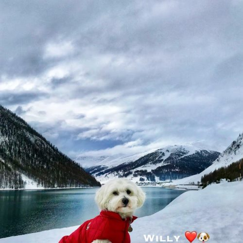 Willy ♥ and the lake of Livigno