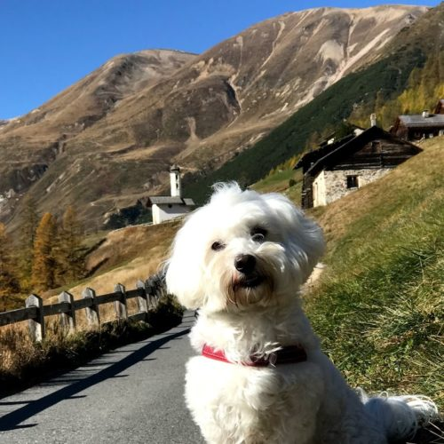 Willy ♥ portrait in Federia valley