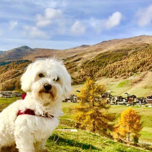 Willy ♥ Livigno - Autumn - Carosello 3000 mountains