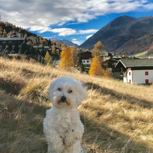 Willy ♥ Livigno - Autumn - Teola district and Monte li Resa