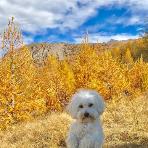 Willy ♥ Livigno Autumn colors